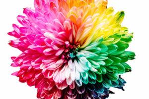 Renklerin Anlamları ve Renklerin Özellikleri